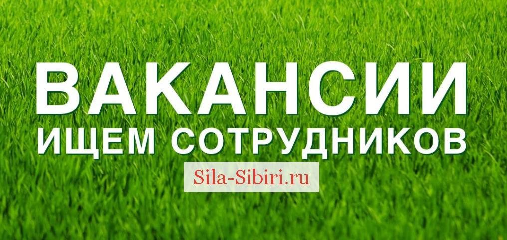 Вакансии для Силы Сибири